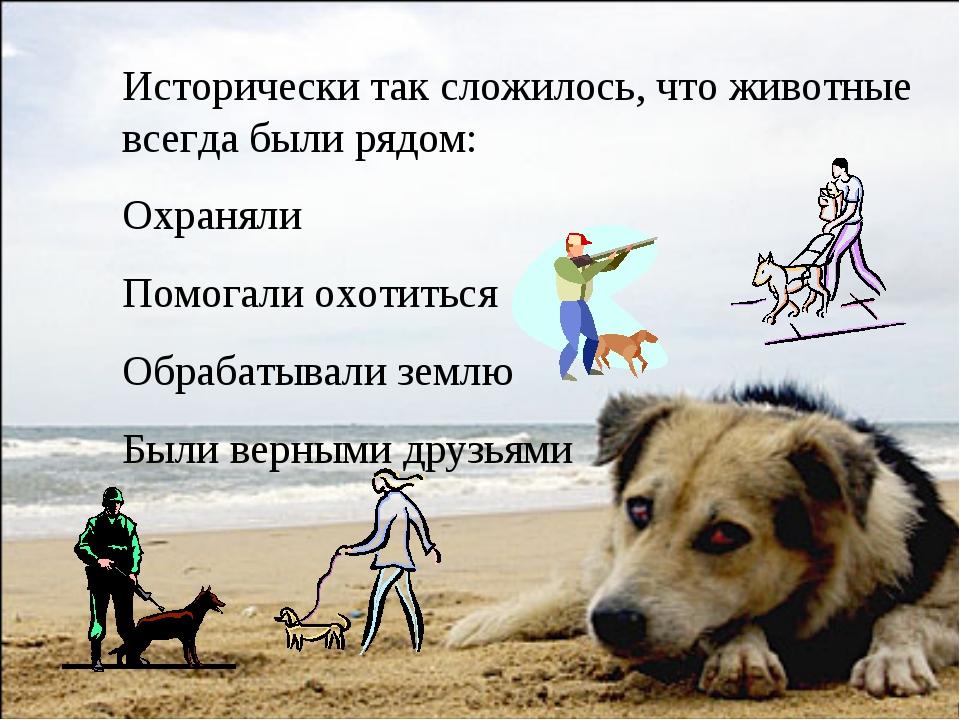 Исторически так сложилось, что животные всегда были рядом: Охраняли Помогали...