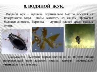 Водяной жук - вертячка изумительно быстро носится на поверхности воды. Чтоб