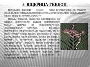 9. ЯЩЕРИЦА-ГЕККОН. Небольшая ящерица — геккон — легко передвигается по гладк