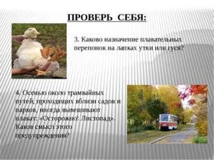 3. Каково назначение плавательных перепонок на лапках утки или гуся? 4. Осень