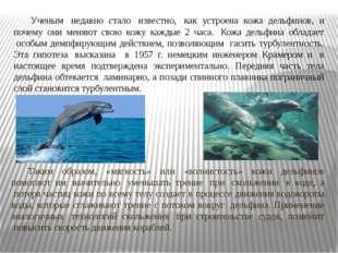 Ученым недавно стало известно, как устроена кожа дельфинов, и почему они