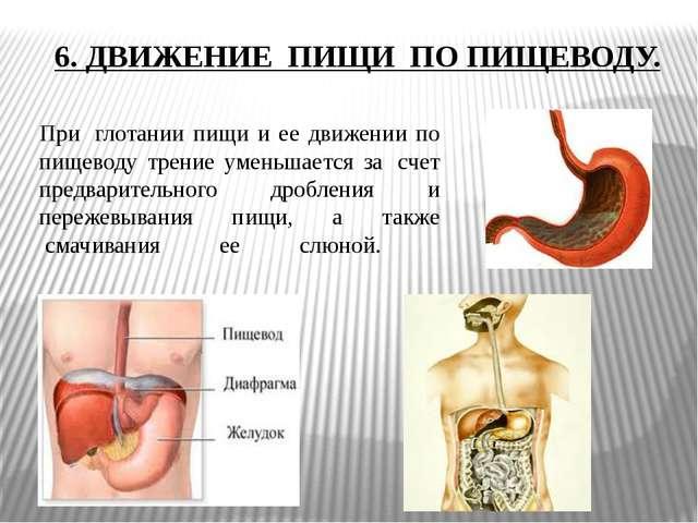При глотании пищи и ее движении по пищеводу трение уменьшается за счет пред...