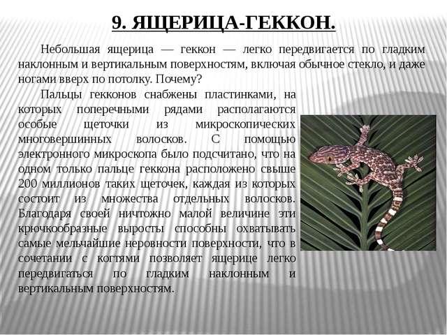 9. ЯЩЕРИЦА-ГЕККОН. Небольшая ящерица — геккон — легко передвигается по гладк...