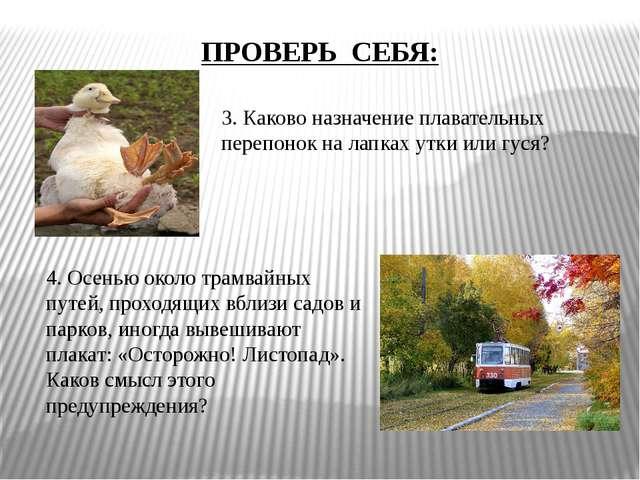 3. Каково назначение плавательных перепонок на лапках утки или гуся? 4. Осень...