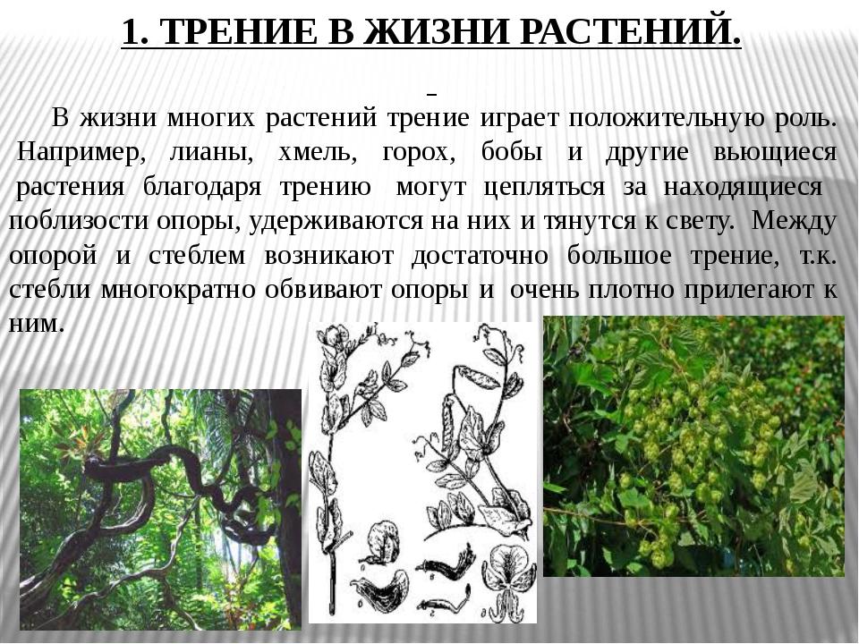 1. ТРЕНИЕ В ЖИЗНИ РАСТЕНИЙ. В жизни многих растений трение играет положитель...