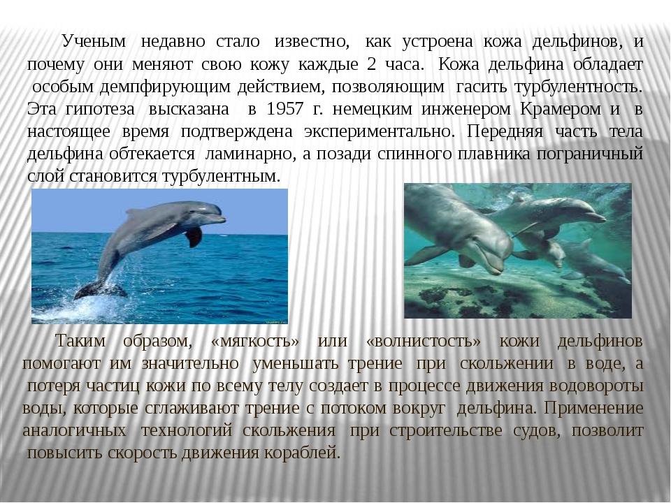 Ученым недавно стало известно, как устроена кожа дельфинов, и почему они...