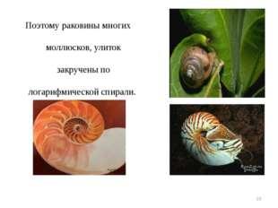 Поэтому раковины многих моллюсков, улиток закручены по логарифмической спирал