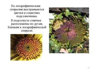 Пологарифмическим спиралям выстраиваются цветки всоцветиях подсолнечника. В