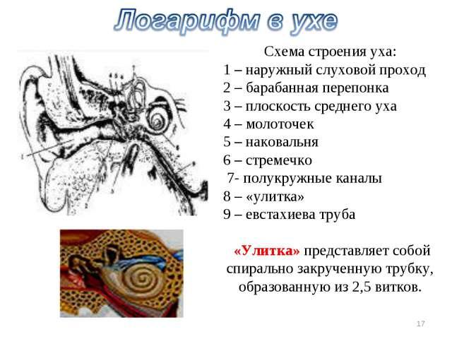 Схема строения уха: 1 – наружный слуховой проход 2 – барабанная перепонка 3 –...