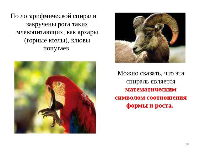 По логарифмической спирали закручены рога таких млекопитающих, как архары (г...