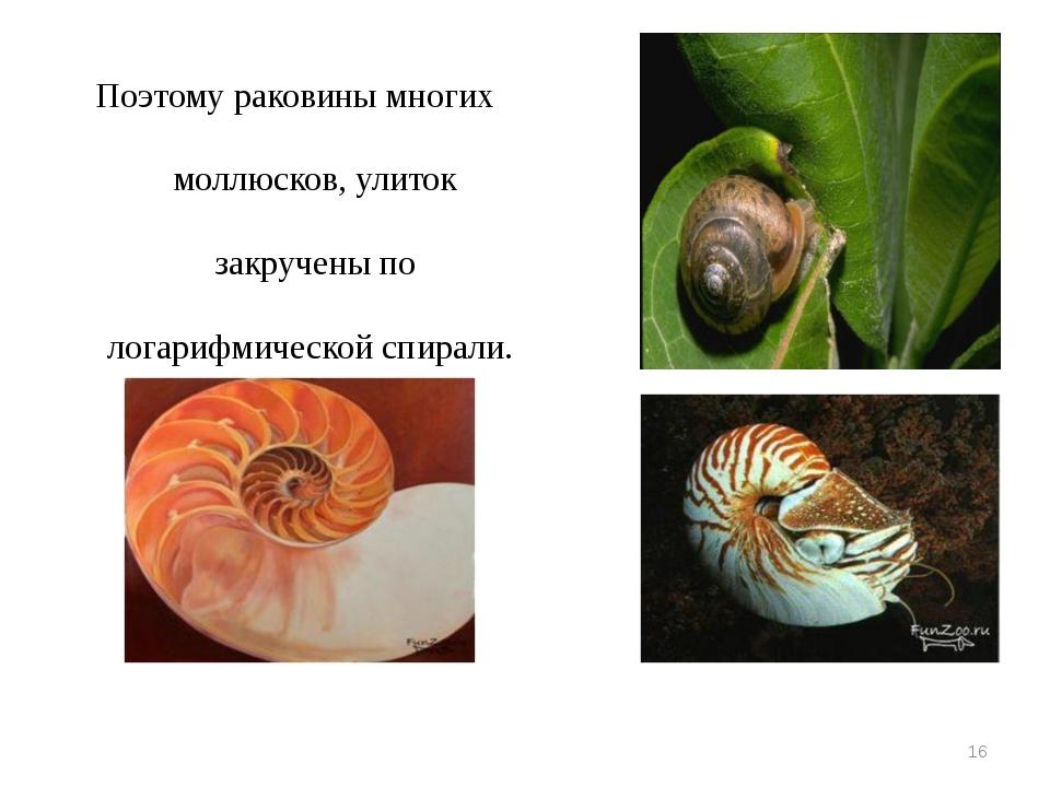 Поэтому раковины многих моллюсков, улиток закручены по логарифмической спирал...