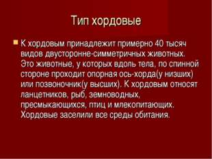 Тип хордовые К хордовым принадлежит примерно 40 тысяч видов двусторонне-симме