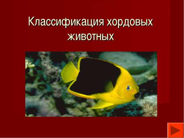 Классификация хордовых животных РМ - null