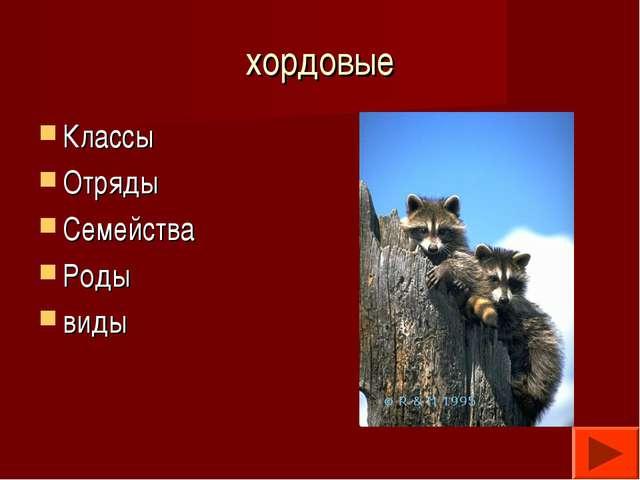 хордовые Классы Отряды Семейства Роды виды
