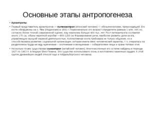 Основные этапы антропогенеза Архантропы Первый представитель архантропов —пи