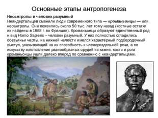 Основные этапы антропогенеза Неоантропы и человек разумный Неандертальцев сме