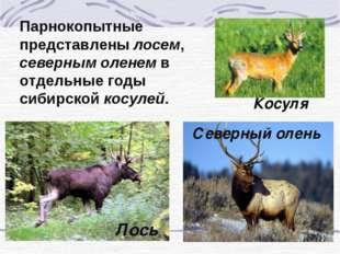 Парнокопытные представлены лосем, северным оленем в отдельные годы сибирской