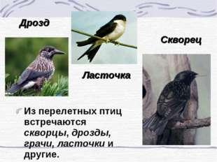 Из перелетных птиц встречаются скворцы, дрозды, грачи, ласточки и другие. Дро