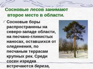 Сосновые лесов занимают второе место в области. Сосновые боры распространены