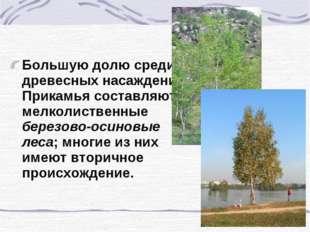 Большую долю среди древесных насаждений Прикамья составляют мелколиственные б