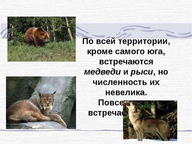 По всей территории, кроме самого юга, встречаются медведи и рыси, но численно...