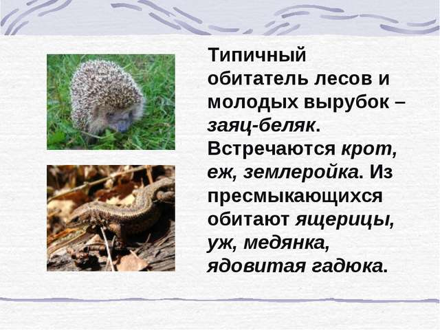 Типичный обитатель лесов и молодых вырубок – заяц-беляк. Встречаются крот, еж...