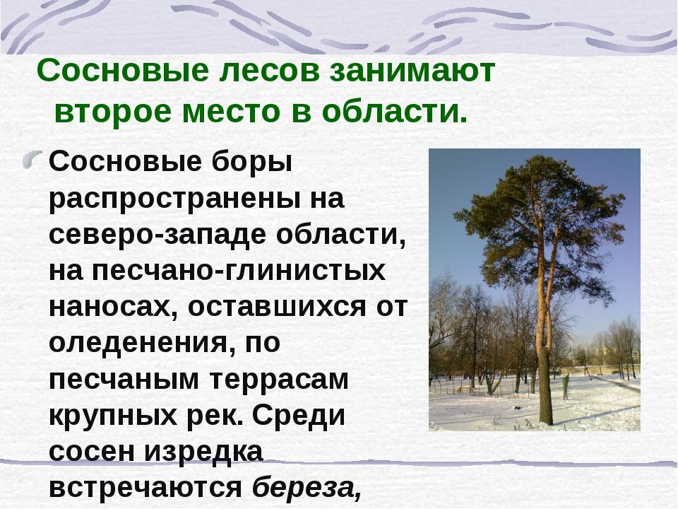Сосновые лесов занимают второе место в области. Сосновые боры распространены...