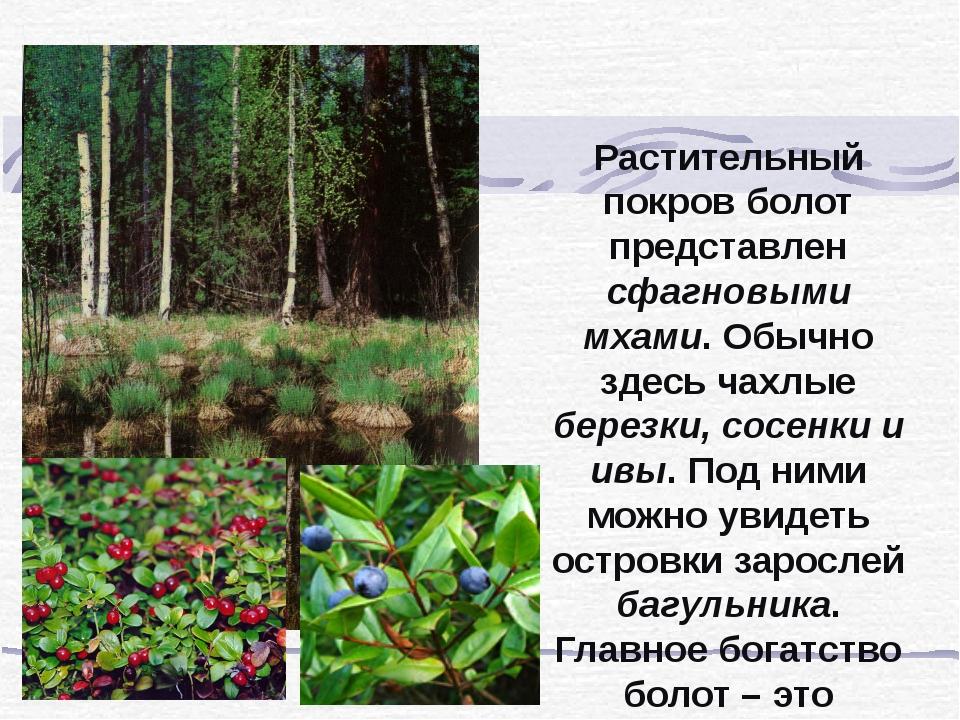 Растительный покров болот представлен сфагновыми мхами. Обычно здесь чахлые б...
