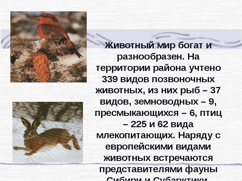 Животный мир богат и разнообразен. На территории района учтено 339 видов позв...