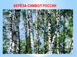 БЕРЁЗА-СИМВОЛ РОССИИ