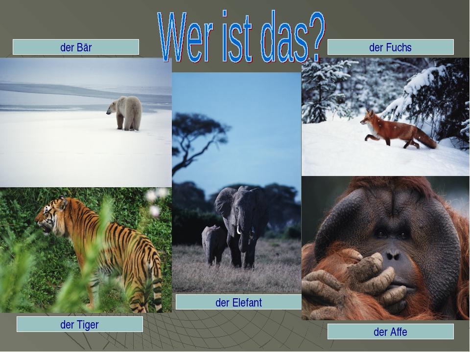 der Tiger der Fuchs der Bär der Elefant der Affe