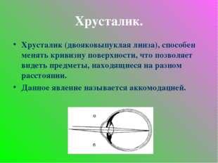 Хрусталик. Хрусталик (двояковыпуклая линза), способен менять кривизну поверхн