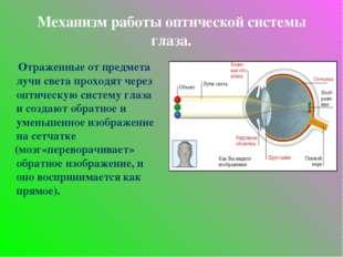 Механизм работы оптической системы глаза. Отраженные от предмета лучи света п