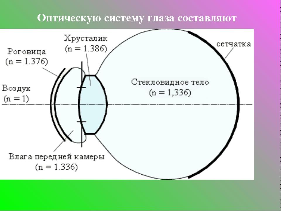 Оптическую систему глаза составляют роговица, водянистая влага, хрусталик и с...