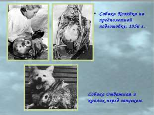 Собака Козявка на предполетной подготовке, 1956 г. Собака Отважная и кролик п