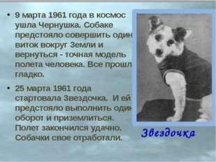9 марта 1961 года в космос ушла Чернушка. Собаке предстояло совершить один ви