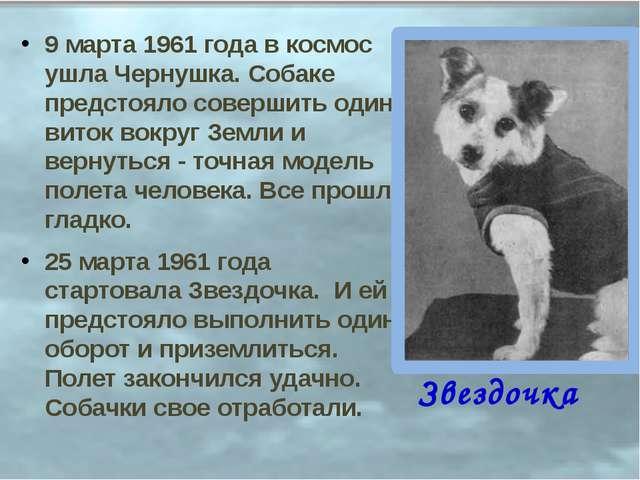 9 марта 1961 года в космос ушла Чернушка. Собаке предстояло совершить один ви...