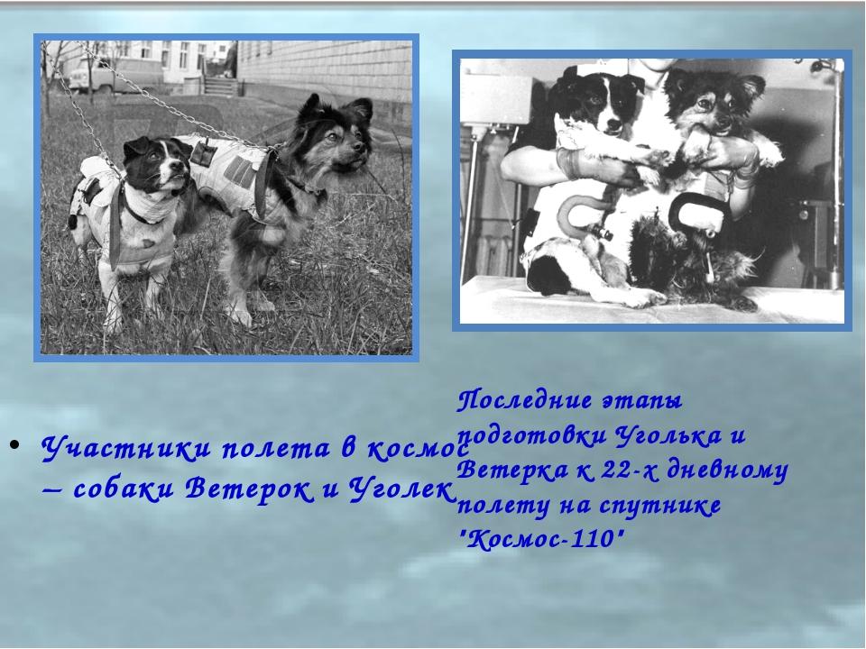 Участники полета в космос – собаки Ветерок и Уголек Последние этапы подготовк...