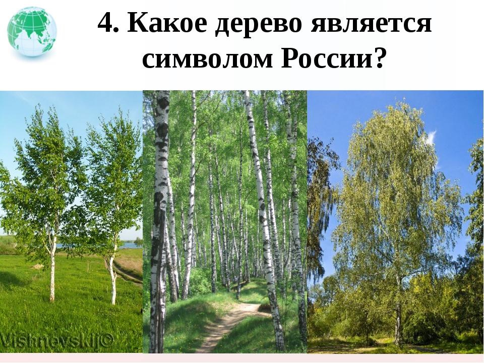 4. Какое дерево является символом России?