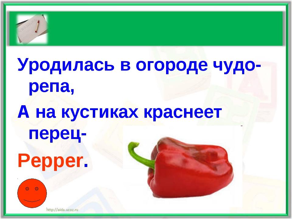 Уродилась в огороде чудо-репа, А на кустиках краснеет перец- Pepper.
