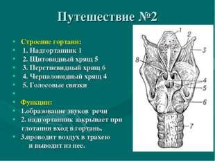 Путешествие №2 Строение гортани: 1. Надгортанник 1 2. Щитовидный хрящ 5 3. Пе