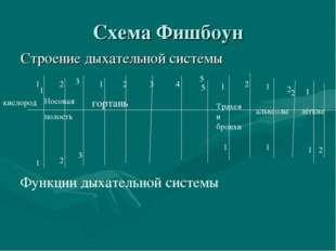 Схема Фишбоун Строение дыхательной системы 1 1 2 5 2 Функции дыхательной сист