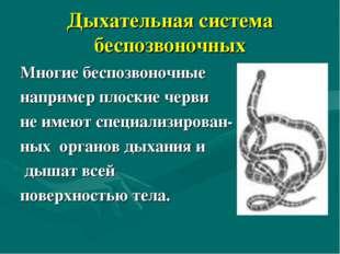 Дыхательная система беспозвоночных Многие беспозвоночные например плоские чер