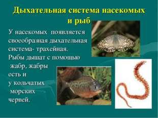 Дыхательная система насекомых и рыб У насекомых появляется своеобразная дыхат