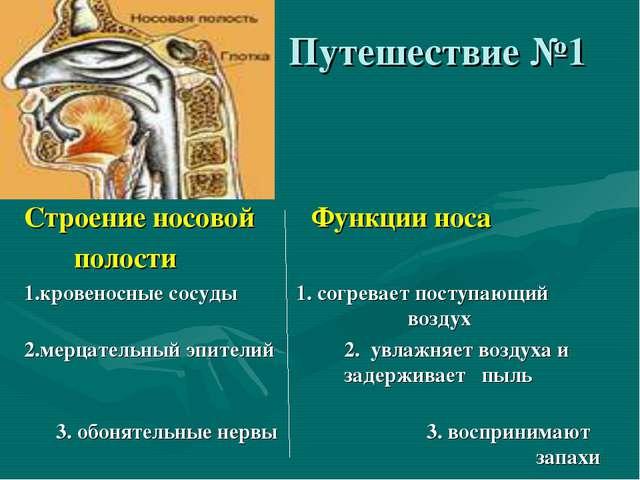 Путешествие №1 Строение носовой Функции носа полости 1.кровеносные сосуды 1....
