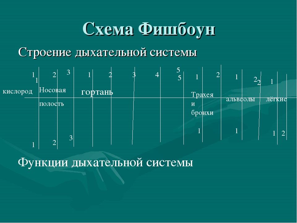 Схема Фишбоун Строение дыхательной системы 1 1 2 5 2 Функции дыхательной сист...