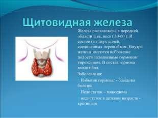 Железа расположена в передней области шее, весит 30-60 г. И состоит из двух д