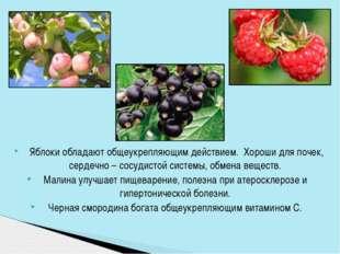 Яблоки обладают общеукрепляющим действием. Хороши для почек, сердечно – сос