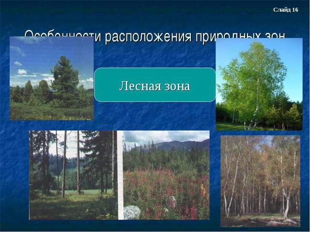 Особенности расположения природных зон Лесная зона Слайд 16