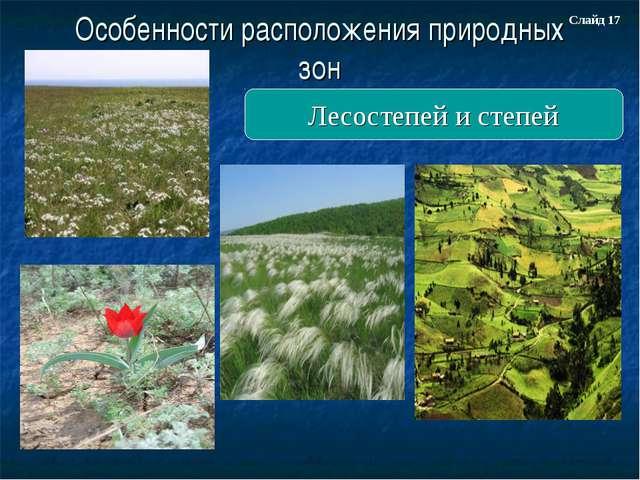 Особенности расположения природных зон Лесостепей и степей Слайд 17